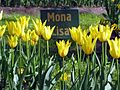 Tulip festival 2017 on Yelagin Island. Mona Lisa2.jpg