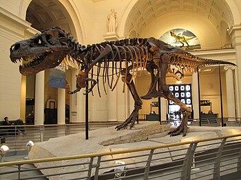 "Tyrannosaurus rex ""Sue"" displayed at..."