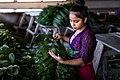 USAID Measuring Impact Conservation Enterprise Retrospective (Guatemala; Rainforest Alliance) (40304776001).jpg