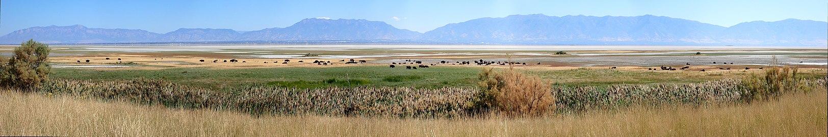 US Utah Buffalo Antelope Island Panorama.jpg