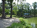 Ukraine. August 2012. Forest Vodice. - panoramio.jpg
