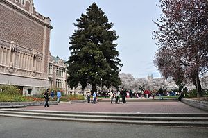 University of Washington Quad cherry blossoms 2014 - 01 (13347862214).jpg