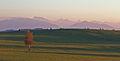 Unterthingau - Brandlemoos - Alpen in rosa 02.JPG
