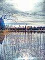 Valdaysky District, Novgorod Oblast, Russia - panoramio (3443).jpg