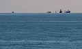 Vaquita3 Olson NOAA.jpg