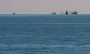 Vaquita - A vaquita swims in the foreground while fishing boats ply their trade in the distance.