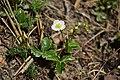 Velká Volavka 2020-04-23 Jahodník.jpg