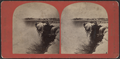View of Horse-Shoe Fall, from Robert N. Dennis collection of stereoscopic views.png
