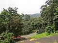 Views from Iritty - Virajpet road (3).jpg