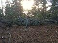 Vikingargraven2.jpeg
