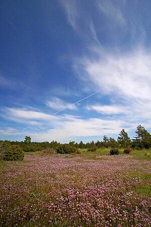 Vilsandi - Image: Vilsandirahvuspark suvi