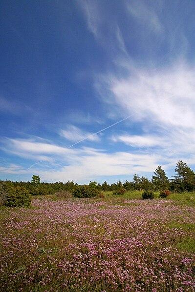 File:Vilsandirahvuspark suvi.jpg