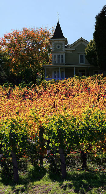 English: Vineyards in Napa Valley