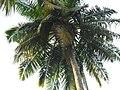 Viper island andmans (6).jpg