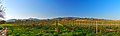 Vista verso Torrazza - panoramio (1).jpg