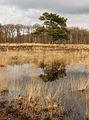 Vliegden (Pinus sylvestris) spiegelt zich in een heide ven. Locatie, natuurgebied Delleboersterheide – Catspoele 02.jpg