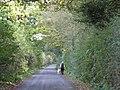 Walking The Dog, Wrenshot Lane, High Legh - geograph.org.uk - 1522533.jpg