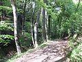 Wanderweg durch den Landsberger Busch - 01.jpg