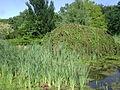 Warsaw. Powsin. Botanical Garden 163.JPG