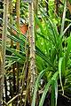 Wikipedia 13. Fotoworkshop Botanischer Garten Erlangen 2013 by-RaBoe 142.jpg
