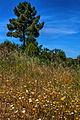 Wild flowers near Romeu.JPG