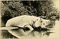 Wild game in Zambezia (1914) (14564778667).jpg