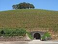 Wine cave & vineyard.jpg