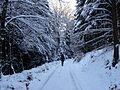 Winter 2017 im Tal der Großen Steinmecke (2).JPG