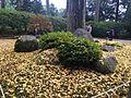 Yellow ginkgo leaves in Daikozenji Temple.JPG