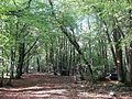 Yewtree Wood - geograph.org.uk - 1529850.jpg