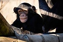 Little Rock Zoo Wikipedia