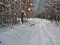 Zimní cesta na Babu - panoramio.jpg