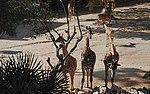 Zoo de Lisboa by Juntas 47.jpg