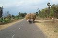 """""""Bullock cart"""".JPG"""