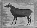 """Study of a Nilgai (Blue Bull)"", Folio from the Shah Jahan Album MET 159447.jpg"