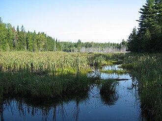 Mactaquac Provincial Park - Beaver pond in Mactaquac Provincial Park