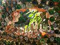 Útila Jade Seahorse Restaurant glass art.jpg