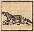 Œdipus Ægyptiacus, 1652-1654, 4 v. 1140 (25886700611).jpg