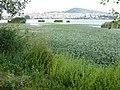 Ελώδης περιοχή της Λίμνης Ορεστιάδας - Swampy area of Lake Orestiada.jpg