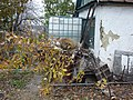 """В саду """"Строитель-4"""" - panoramio.jpg"""