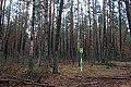 Глибокий ліс IMG 4285.jpg