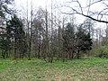Дубровицкий лес весной 2021 01.jpg