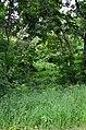 Западная часть парка Нивки. Фото 20.jpg