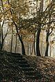 Звездарска шума у јесен.jpg