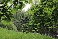 Красота природы - Елагин остров.jpg