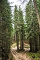 Лісова--дорога..jpg