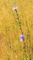 Метаморфозы природы 43.png