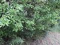 Парк шума Гази Баба во мај (185).JPG