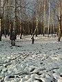 Первый снег - panoramio (8).jpg