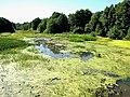 Река Курша между деревнями Колесниково и Дмитриево.JPG